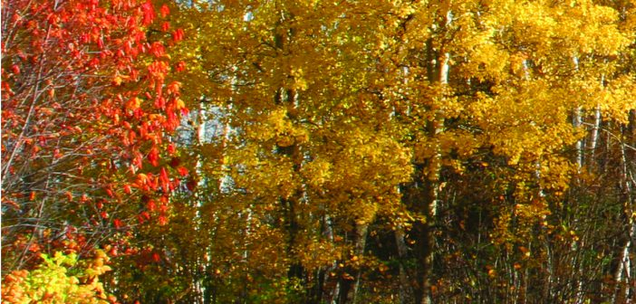 Fall  foliage experiences