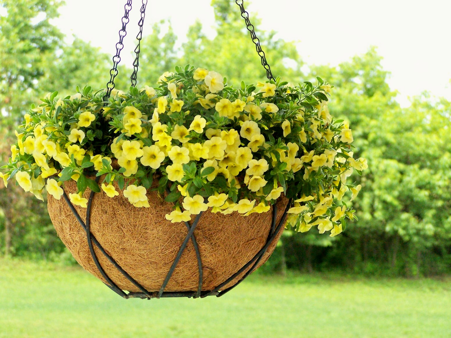 Diy how to make a moss lined hanging basket - Plantas trepadoras de sol ...